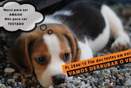 Proibição de Experimentos em Animais na Indústria de Cosméticos entra em pauta novamente na ALMG