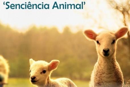 Senciência Animal