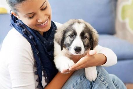 Você cuida bem do seu pet?